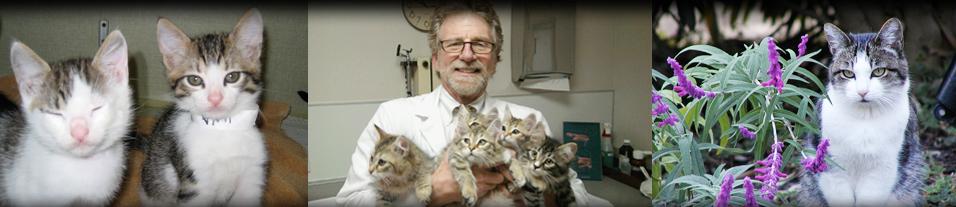 Feline Diabetes Veterinary Specialists Florida